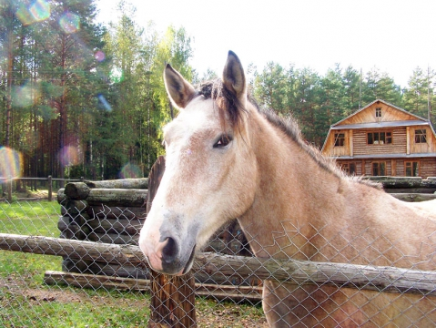 Лошадка на кордоне Борском