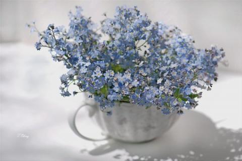 Милые цветы - незабудки