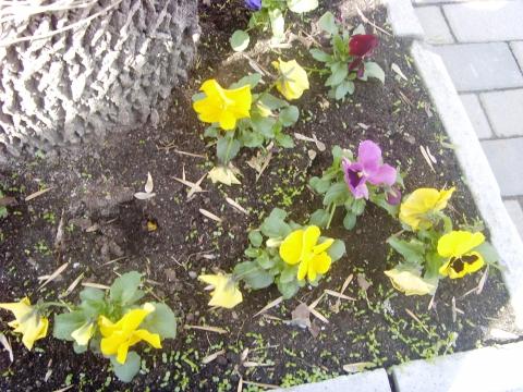 Цветы около дома.06.05.2012г. - Марина Юрьевна Горбачева