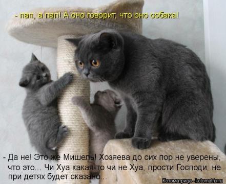 Без названия - Мадина Ганиятулловна Салимова