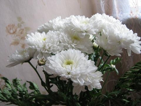 Хризантемы - Марьяна Федоровна Рженичева