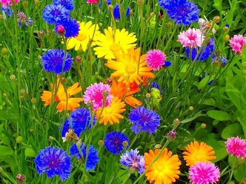 красивые фото цветов полевых