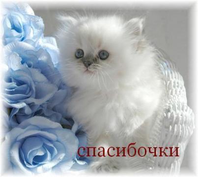 Спасибочки - Галина Валерьевна Кузякова
