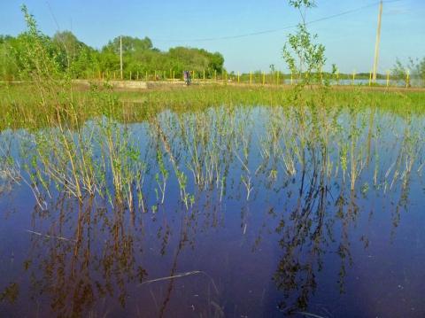 Разлив ниже ГЭС 5 мелкая тёплая лужа - Александр Владимирович Серолапкин