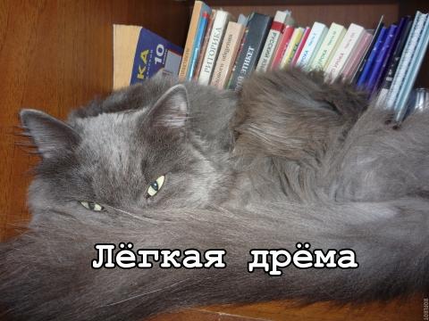 Лёгкая дрёма - Татьяна Васильевна Беспалова