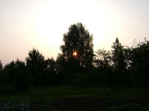 Березовое солнце - Надежда Семеновна Сешко